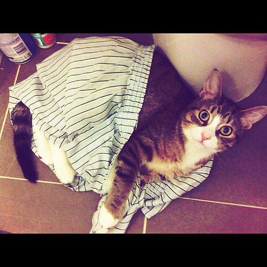 Cat in Boxers