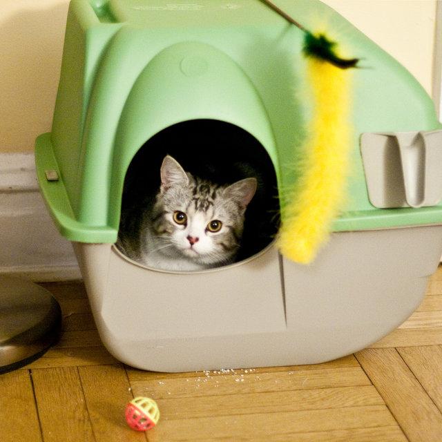 Forums Best Cat Litter Box