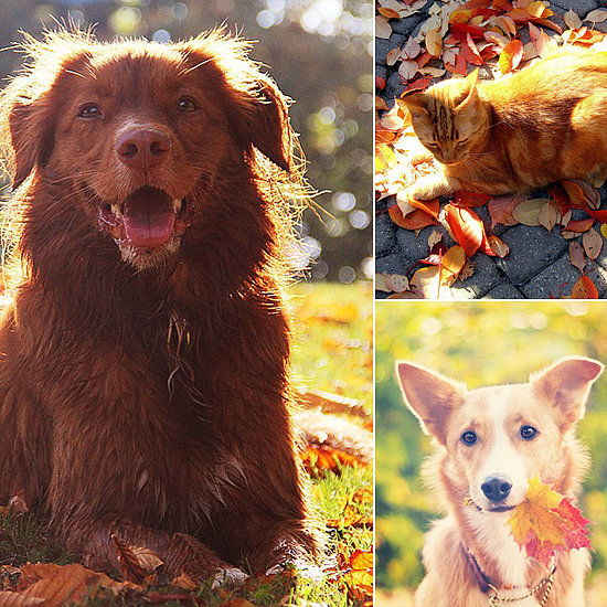 Playful Pets Fall For Autumn Leaves