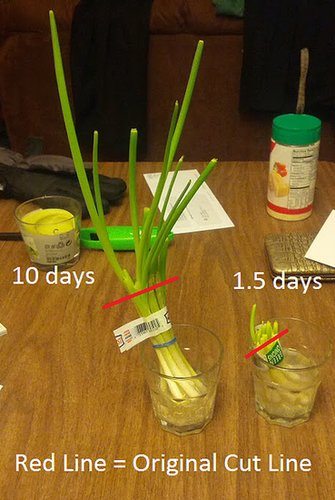 Regrow Vegetables