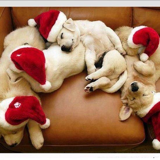 Instagram Challenge: Holiday Pets