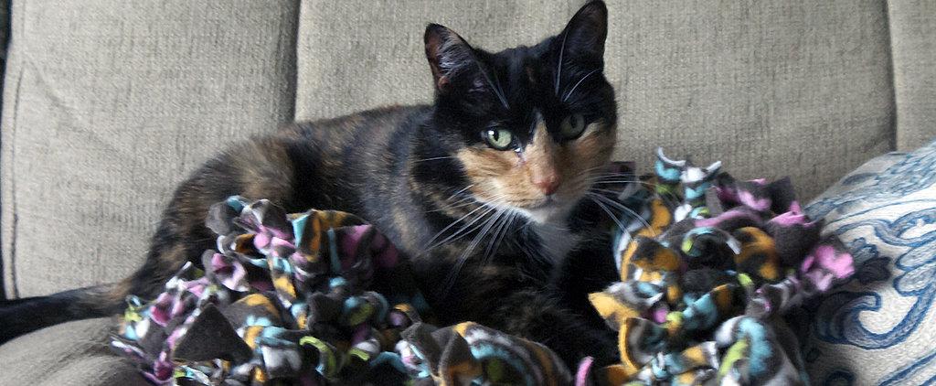 Pet DIY: Comfy, Cozy Cuddle Blanket