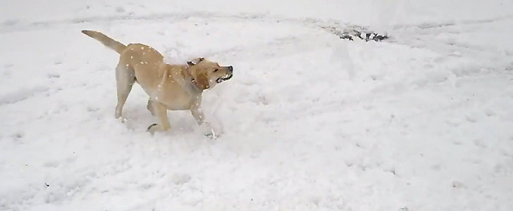 Dogs Playing in the Snow Makes Being Stuck Indoors Better