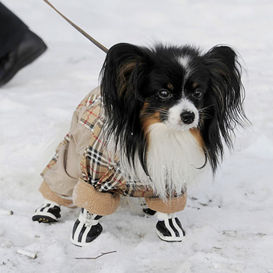 Pet Safety in Freezing Weather