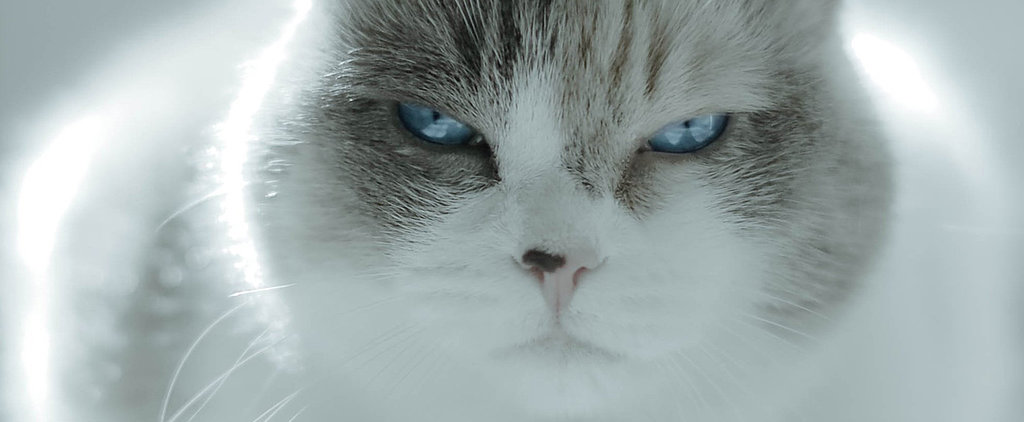 """I Disapprove"": 13 Cats Making Judging-You Faces"