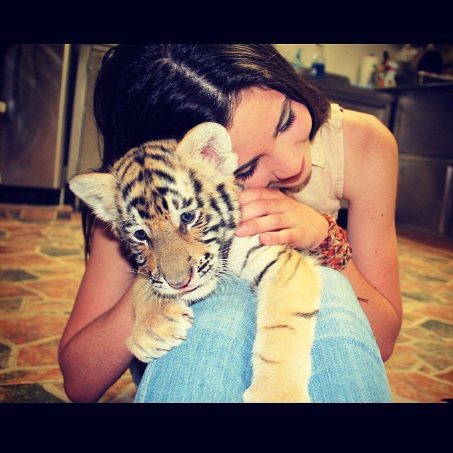Cuddle a Baby Tiger in Thailand