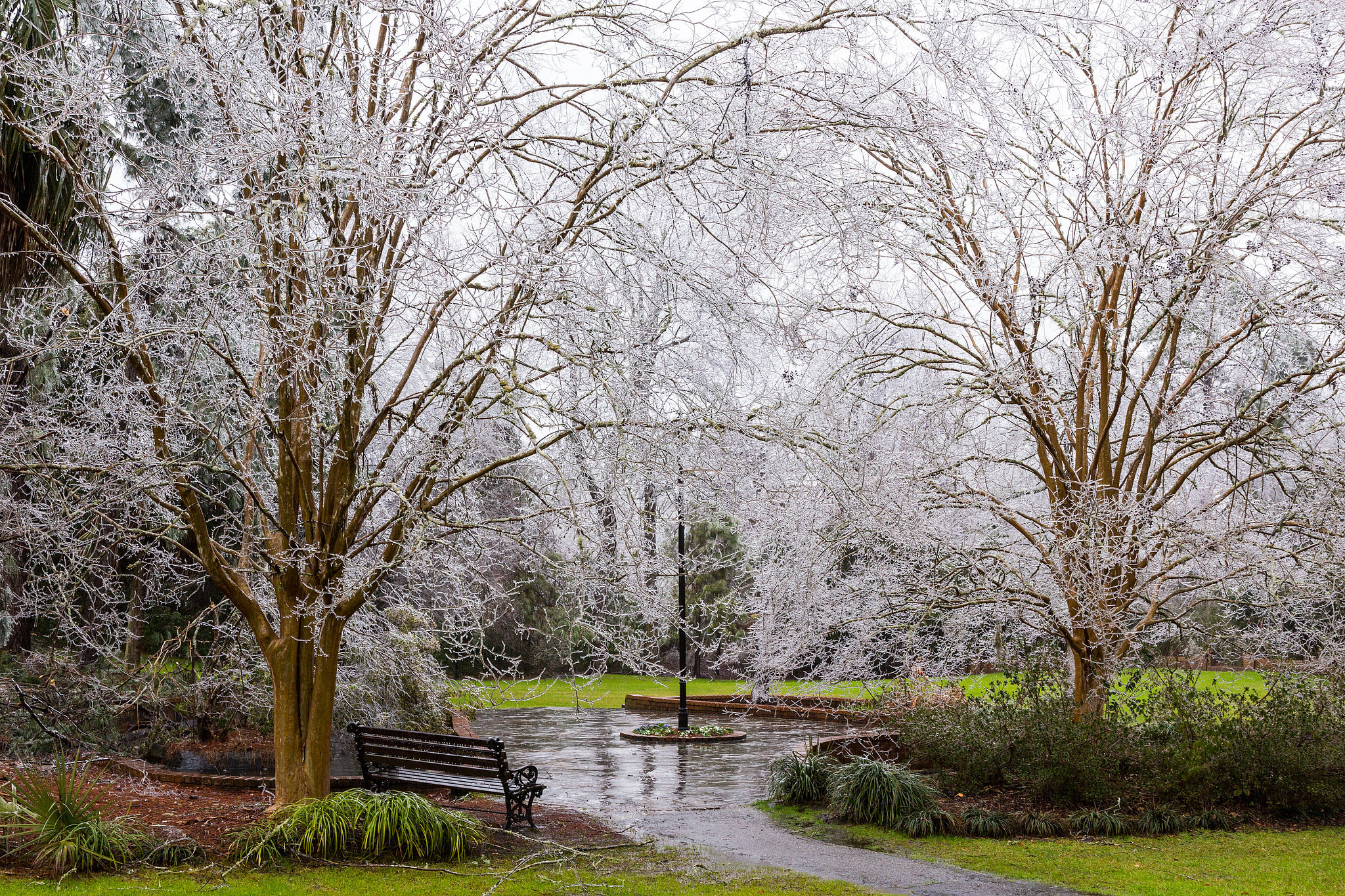 Ice coated the trees in Summerville, SC, during the rare Winter storm.