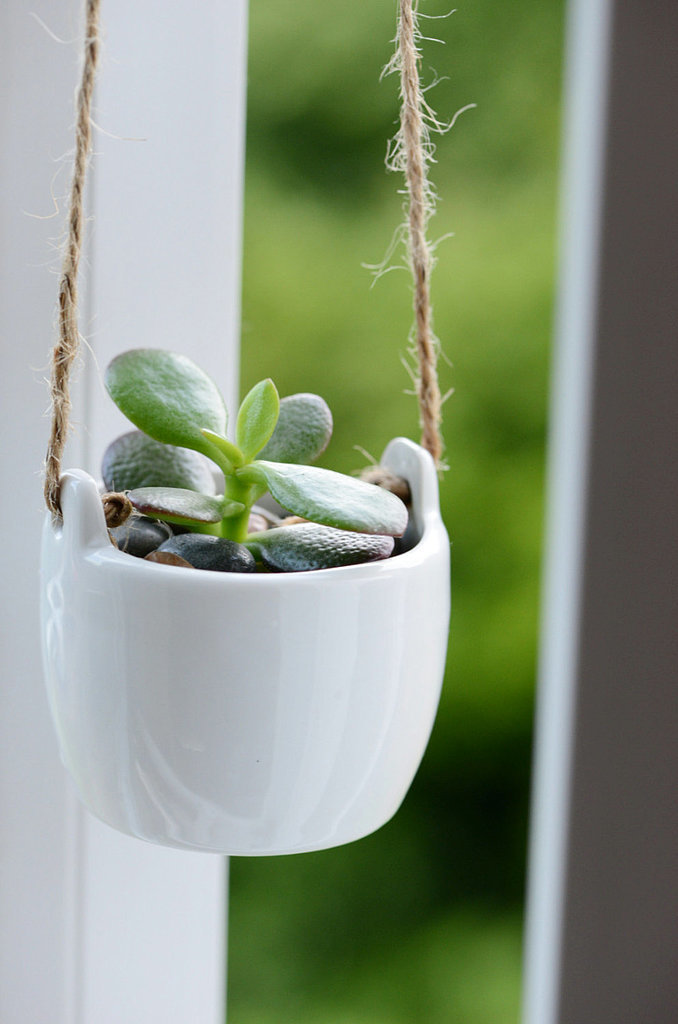 You already know that the jade plant is one of the easiest to keep, so snap up the succulent ($17-$22) in a cute ce