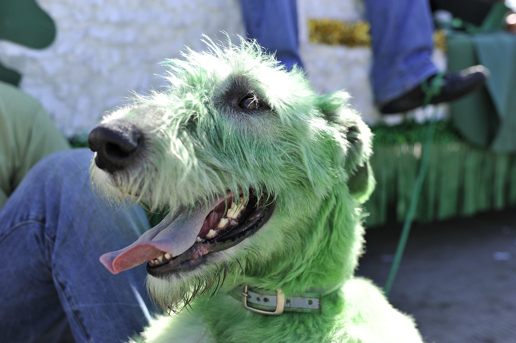 Or, you know, rocking green fur.