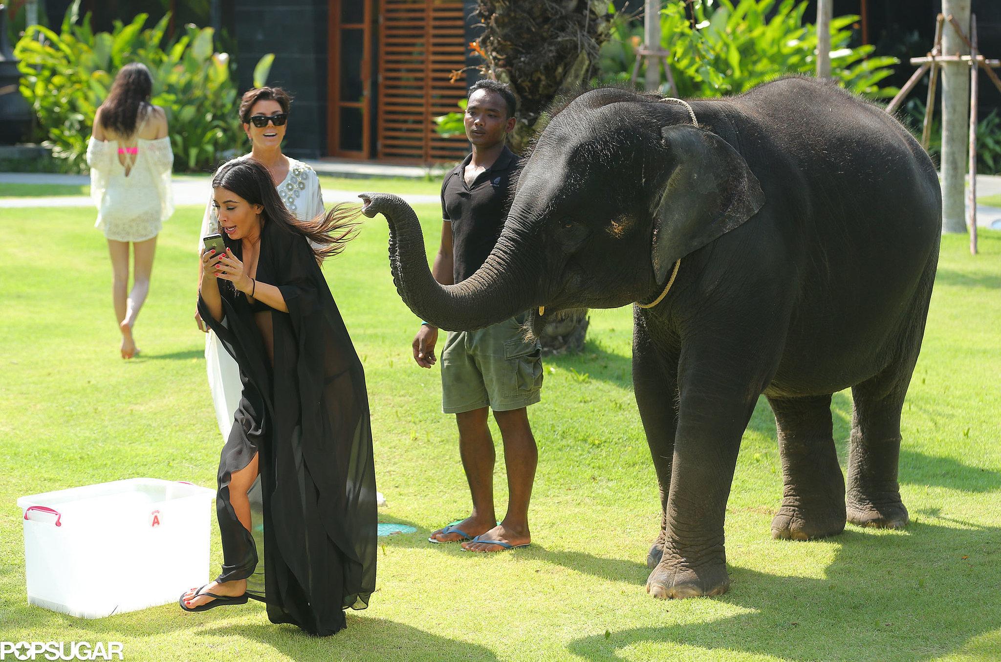 """Then the elephant was like, """"I said no photos!"""""""