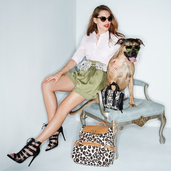 Shopbop Dogs Accessories Shoot