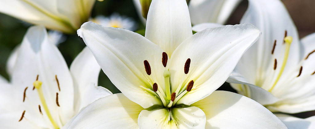 "Kitty-Lovers, Just Say ""No Thanks"" to Easter Lilies!"