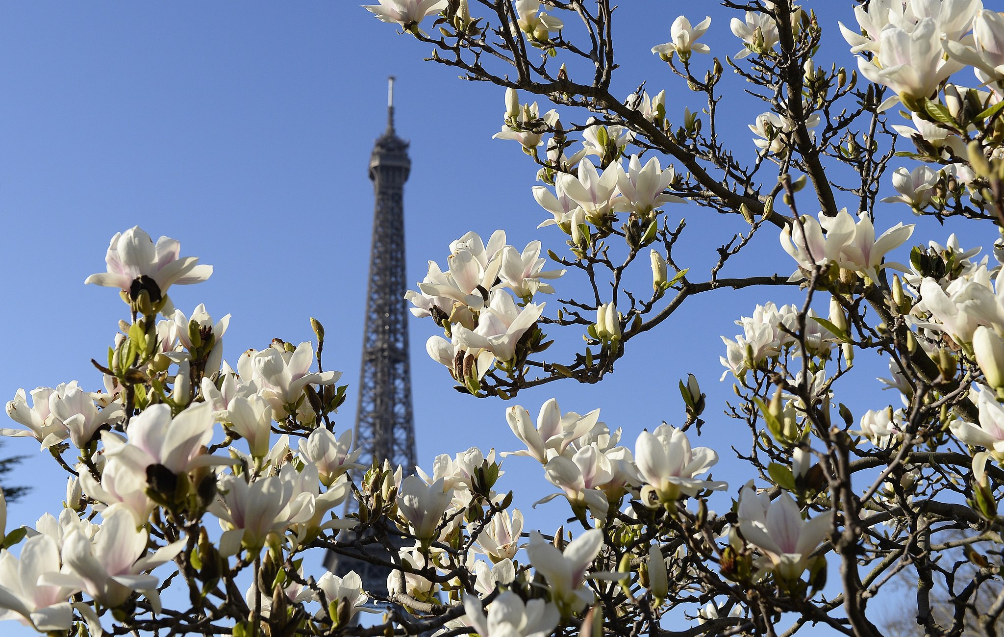 flowers bloomed around the eiffel tower in paris. Black Bedroom Furniture Sets. Home Design Ideas