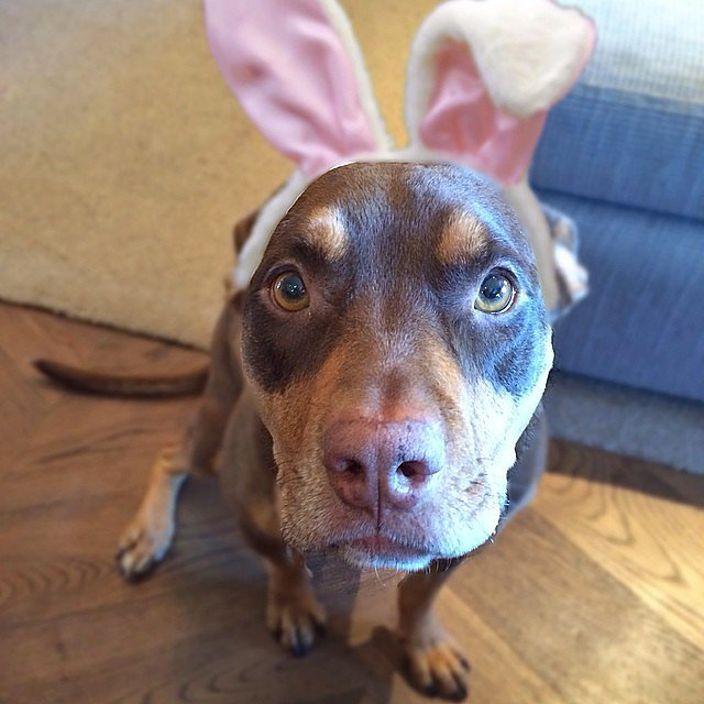 Gisele Bündchen wished her followers a happy Easter with a snap of her dog donning bunny ears. Source: Instagram user giseleofficial
