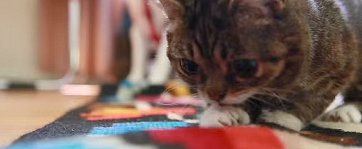 Lil Bub Has an Adorable Play Day