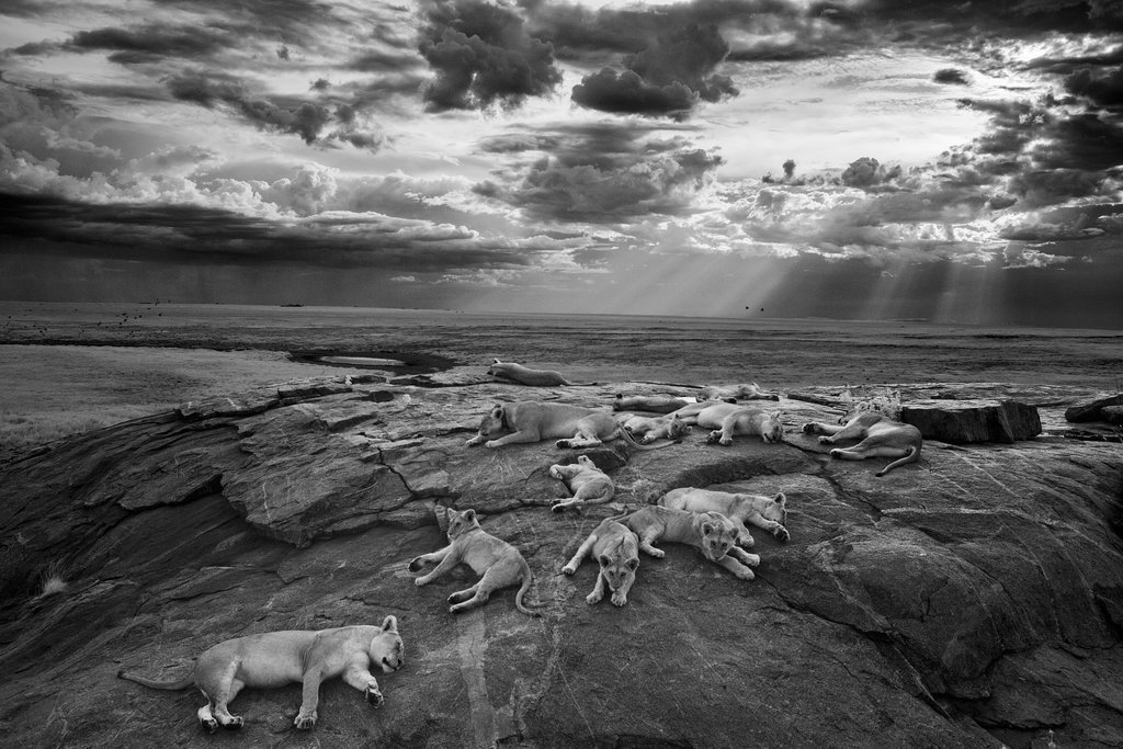 Michael Nichols — Nature and Wildlife