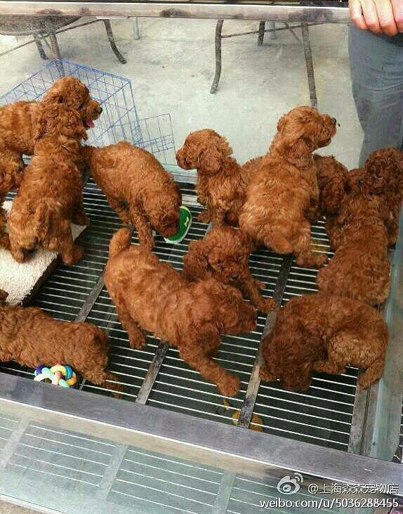 """Wait...that's not fried chicken."" Source: Reddit user muttleydosomething via Imgur"