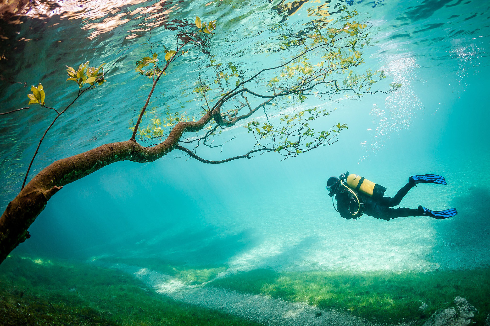 Third Place — Diver in Magic Kingdom