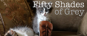 The Best Fifty Shades Parodies — From Frozen to Kittens!