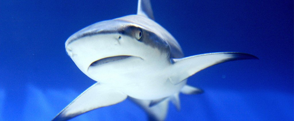 Sharks Could Be Attacking Your Internet Right Now