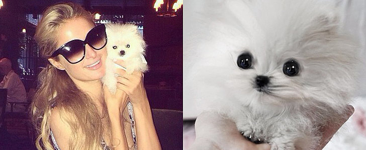 Paris Hilton Shares Sweet Pictures of Her $13K Puppy