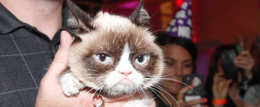 Movie Star Grumpy Cat Has Some Life Advice For You