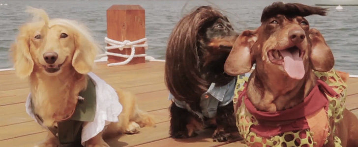 This Dawson's Creek Parody Starring Dachshunds Is a Must See