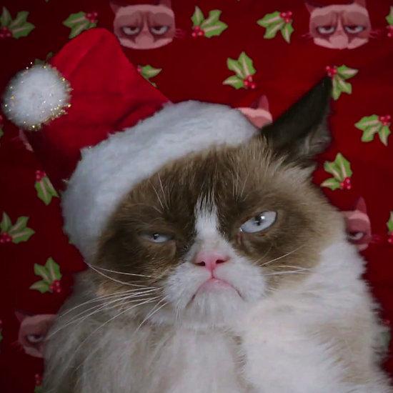 Grumpy Cat Movie Trailer