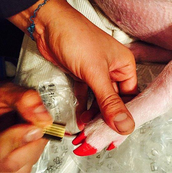 Miley Cyrus' Pig's Nail Polish