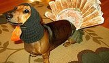 21 Pets Who Love Thanksgiving
