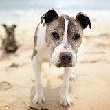 Photographer Lori Fusaro Aids Senior-Dog Adoption With Her Gorgeous Photos