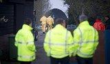 Bird Flu Found on 3 More Dutch Farms