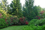 Great Design Plant: Chamaecyparis Nootkatensis (5 photos)