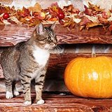 5 Ways My Cats Have Taught Me to Be Thankful