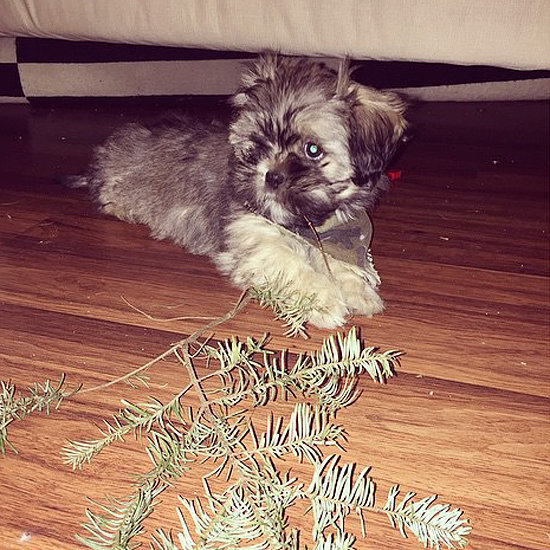 14 Pets Ruining Their Owners' Christmas Decorations
