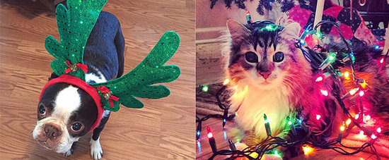 We Can't Get Enough of These Cute Christmas Cats and Dogs
