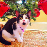 Cats Under the Christmas Tree
