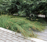 Protect a Precious Resource With a Rain Garden (7 photos)