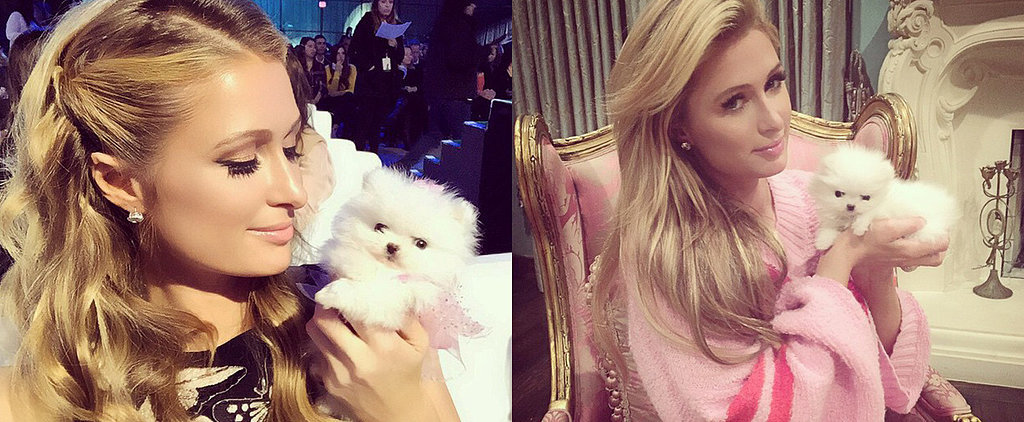 Paris Hilton's New Pup Might Be the Cutest Thing to Grace the Internet