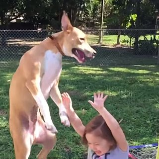 Dog Falls on Kid