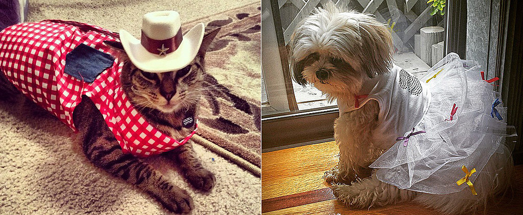 14 Pets Dressed More Snazzily Than Most People