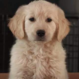 GoDaddy Super Bowl Commercial With Puppy