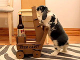 Funny Video: Need a Beer? Summon the Delivery Bunny!
