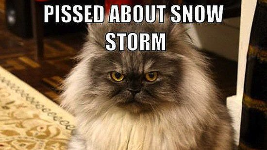 The Most Brr-illiant Snowstorm Memes