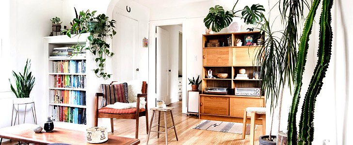 Why Your Home Really Needs Houseplants