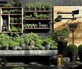 Trending on Gardenista: Garden Envy