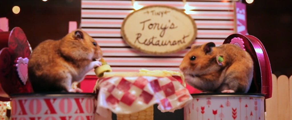 Watch Tiny Hamsters Go on a Tiny Date and Eat Tiny Meatballs