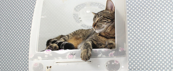 The iMac Bed of Your Cat's Dream