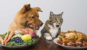 Ask Einstein: Is It Okay to Feed Dog Food to a Cat?