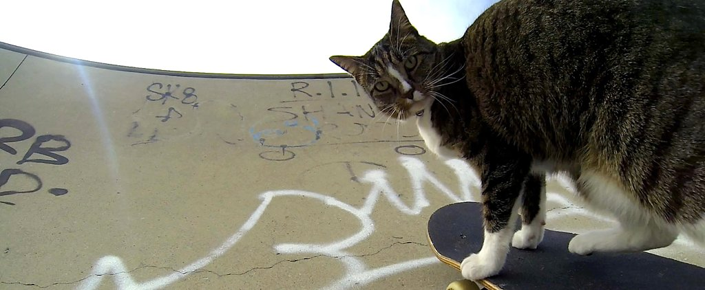 The Viral Skateboarding Cat You Need to Meet